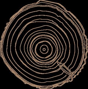 słoje drewna